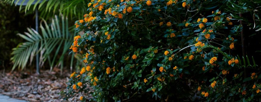 SkyFrog Landscape plants blooming